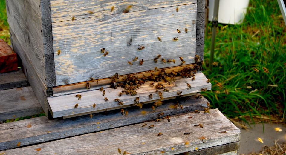 Honig Altes Land Bio