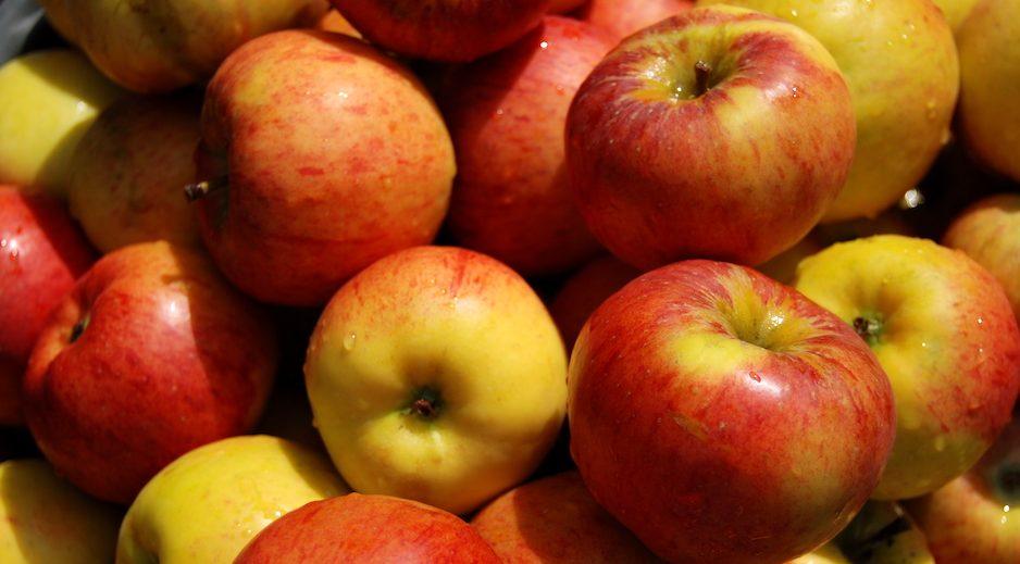 Apfelverkauf Altes Land