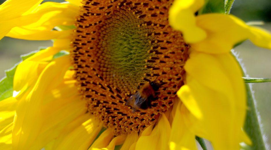 Bio Altes Land Honig